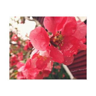 Pink Blossom Canvas Canvas Print