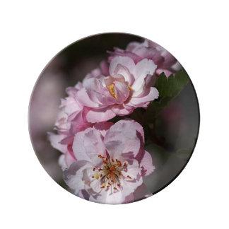 Pink Blossom Crabapple Flowers Porcelain Plate