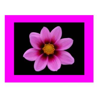 Pink Blossom Greeting Postcard
