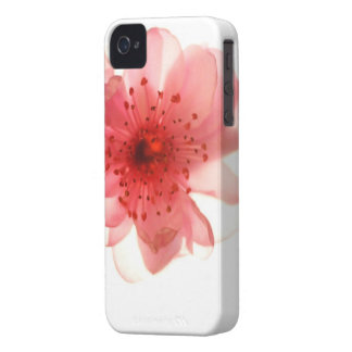 Pink Blossom iPhone 4/4S Case-Mate Barely There™
