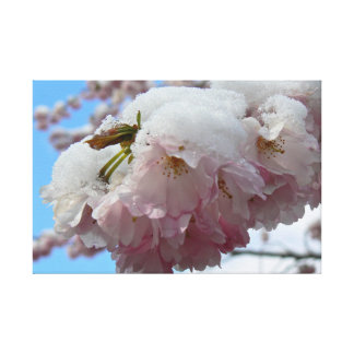 Pink blossom with snow, spring canvas prints