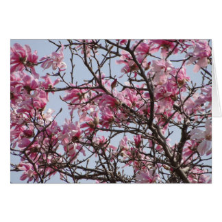 Pink Blossoms Of Spring Card