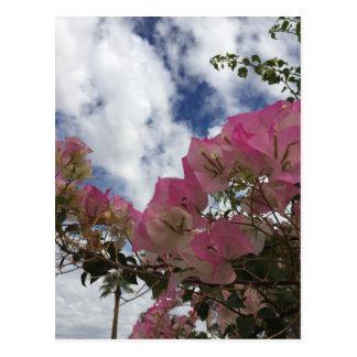 Pink bougainvillea postcard
