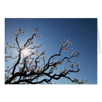 Pink Budding Tree Branches Blank Card