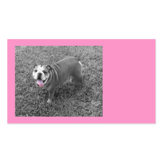 pink bully pack of standard business cards