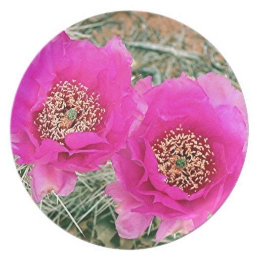 Pink Cactus flowers in bloom Plate
