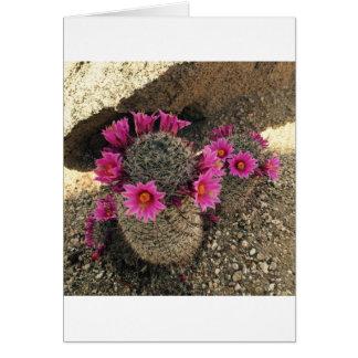 Pink Cactus in Bloom Card