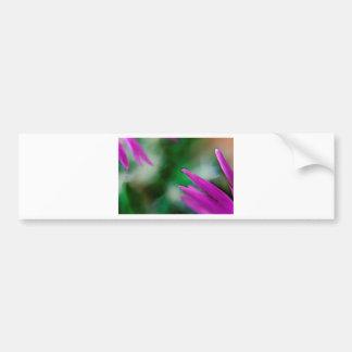 Pink Cactus Petals Bumper Sticker