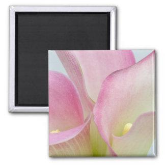 Pink Calla Lilies Refrigerator Magnets