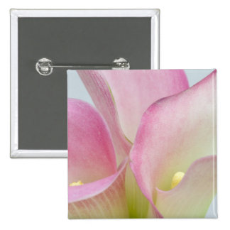 Pink Calla Lilies Pinback Button