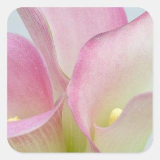 Pink Calla Lilies Square Sticker