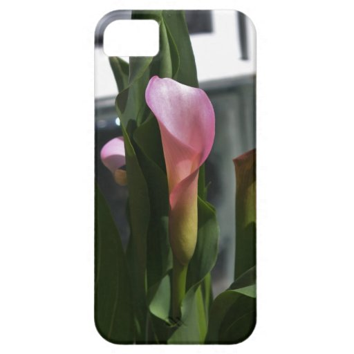Pink Calla Lily Design iPhone 5 Cover