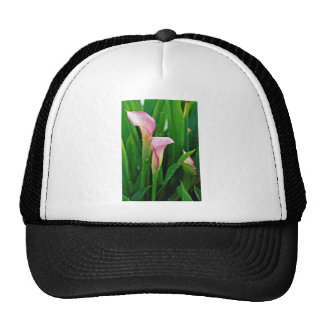 Pink calla lily  flowers hats