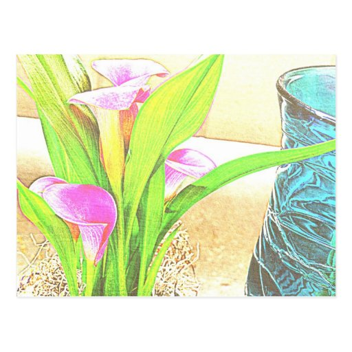 Pink Calla Lily Flowers Postcard