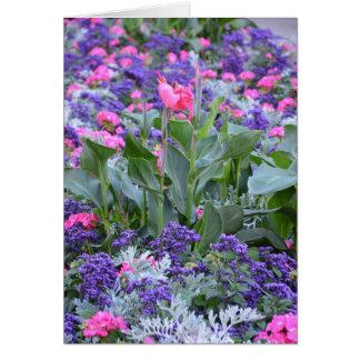 Pink calla lily in spring garden card