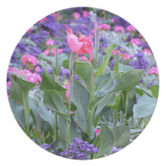 Pink calla lily in spring garden plate