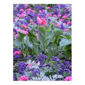 Pink calla lily in spring garden postcard