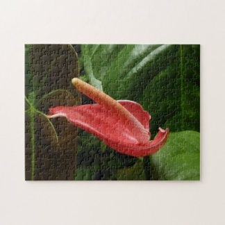 Pink Calla Lily Jigsaw Puzzle