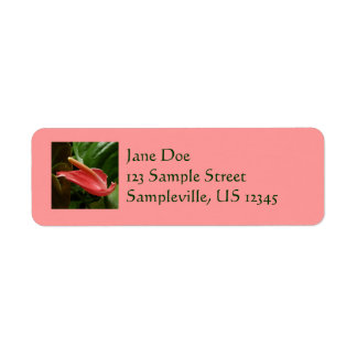 Pink Calla Lily Return Address Label
