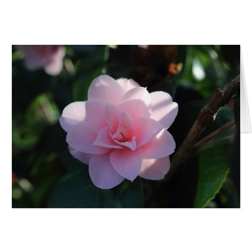 Pink Camellia Card