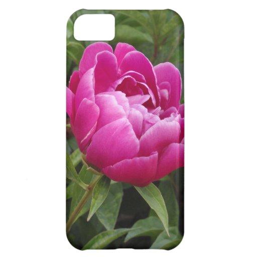 Pink Camellia iPhone 5C Cases