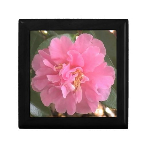 Pink Camellia Gift Box