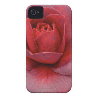 Pink Camellia iPhone Case iPhone 4 Cover