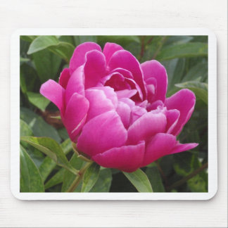 Pink Camellia Mouse Pad