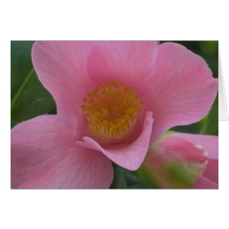 Pink Camellia Note Card