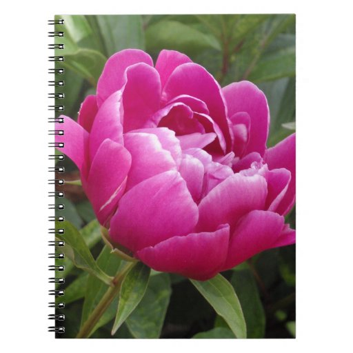 Pink Camellia Note Books