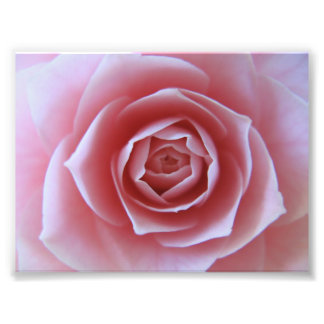 Pink Camellia Art Photo