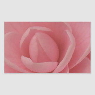 Pink Camellia Rectangular Sticker