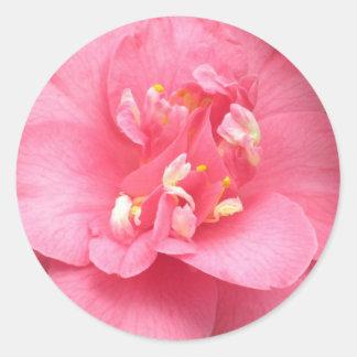 Pink Camellia Round Sticker