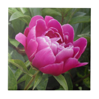 Pink Camellia Small Square Tile