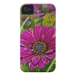 Pink Cape Daisy Flower Blackberry Bold Case
