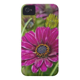 Pink Cape Daisy Flower iPhone 4 4s case-mate case Case-Mate iPhone 4 Case