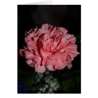 Pink Carnation Card