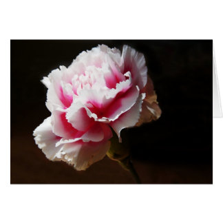 Pink Carnation Dianthus Flower Card