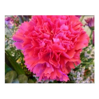 Pink Carnation Postcard