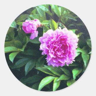 Pink Carnation Rose Bud & Bloom Round Sticker