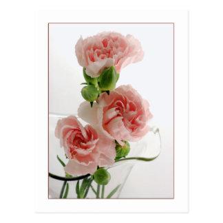 Pink Carnations Photograph Postcard
