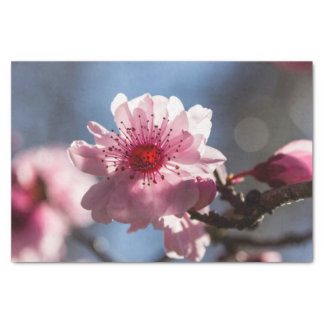 Pink Cherry Blossom Backlit in the Sunshine Tissue Paper