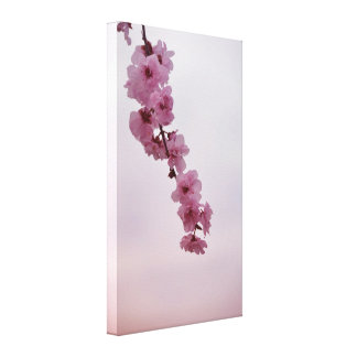 Pink Cherry Blossom Stretched Canvas Prints