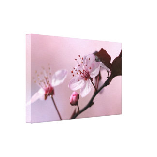Pink Cherry Blossom Canvas Prints