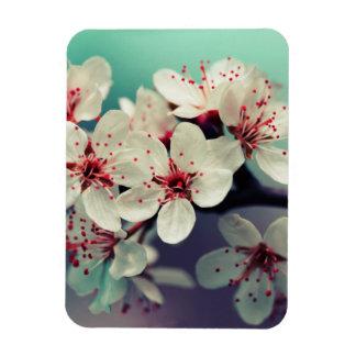 Pink Cherry Blossom, Cherryblossom, Sakura Magnet