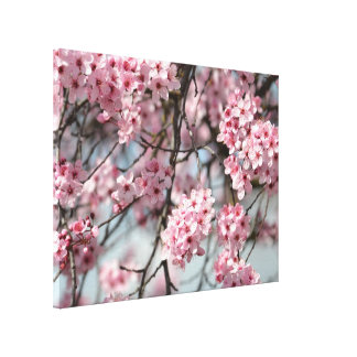 Pink Cherry Blossom Flowers Tree Canvas Print