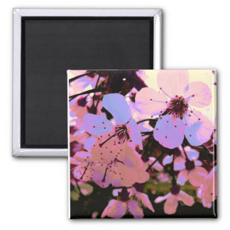 Pink Cherry Blossom Square Magnet