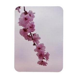 Pink Cherry Blossom Rectangular Photo Magnet