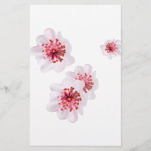 Pink cherry blossom sakura flowers  in Japanese st