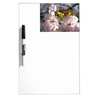 Pink cherry blossoms 01.8 dry erase board